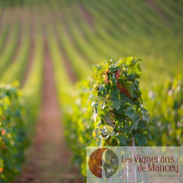 Les Vignerons de Mancey