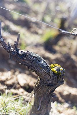 Les vignes d'élodie