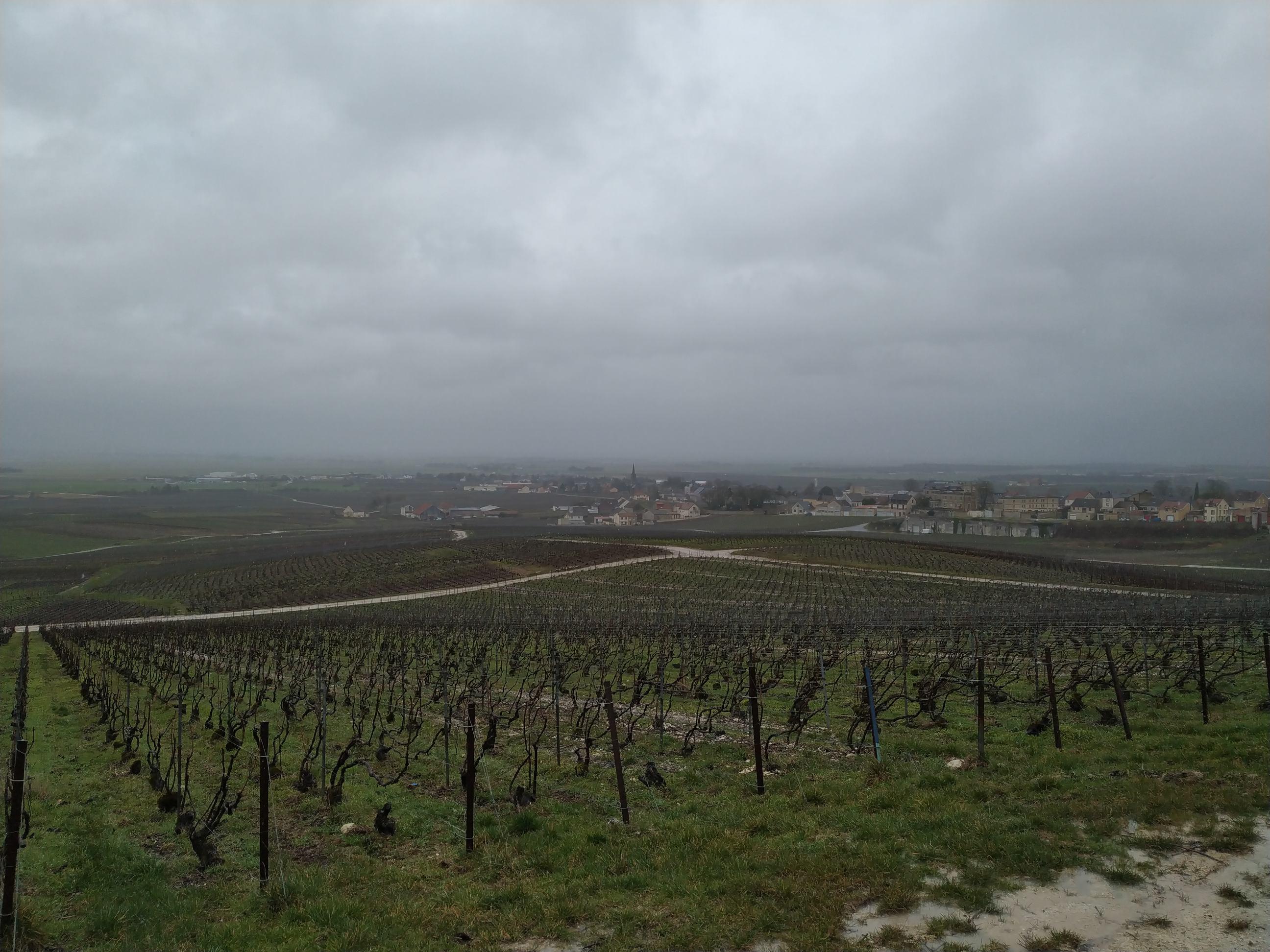 Vue de la montagne de Reims vers Louvois